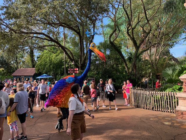Kevin sighting at Animal Kingdom