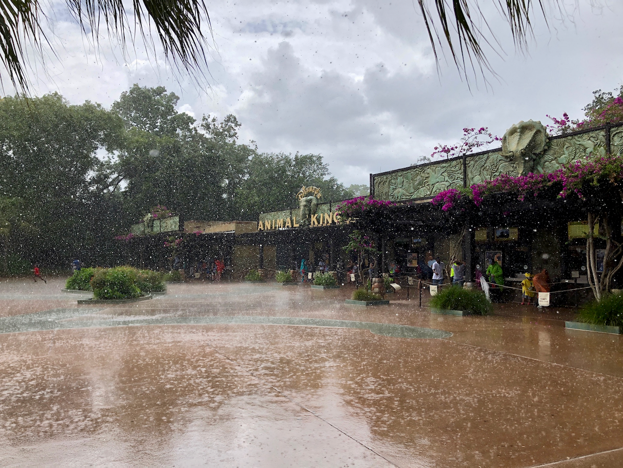 Rainy Day at Animal Kingdom